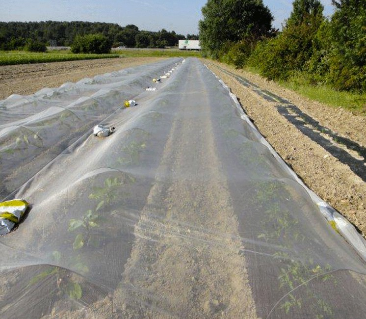 Bioclimat Grande Taille (Filet Anti-Insecte)