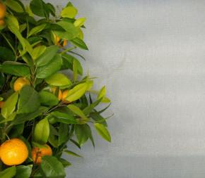 Brise- Vue de Couleur Gris - 1 x 5m